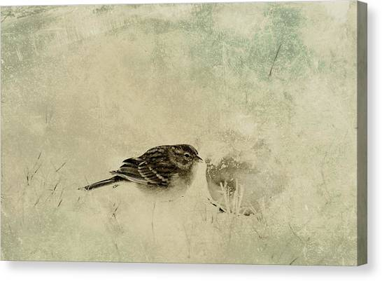 The Orange And Sparrow Canvas Print