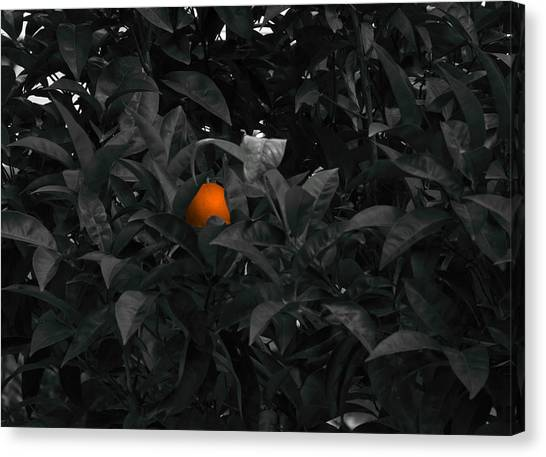 Orange Tree Canvas Print - The Orange by Emme Pons