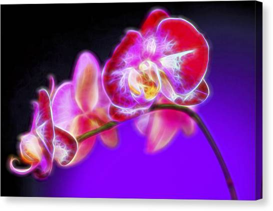 Lavendar Canvas Print - The Orchid Watches II by Jon Glaser