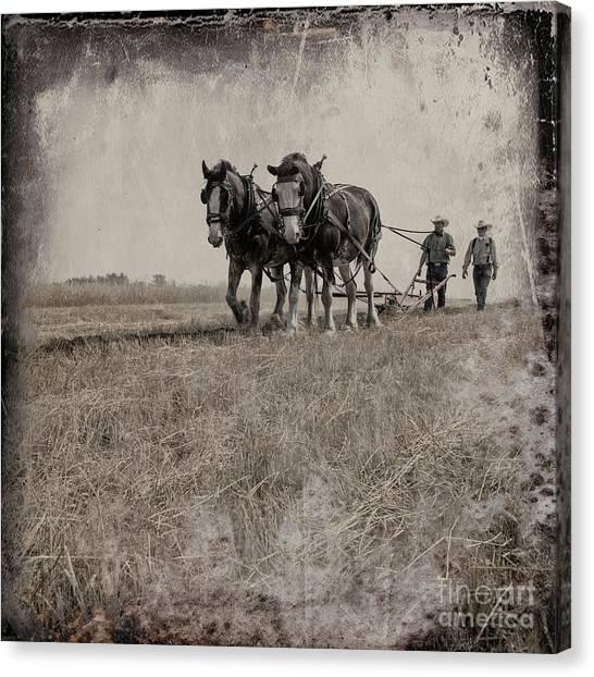 Canvas Print featuring the photograph The Original Horsepower by Brad Allen Fine Art