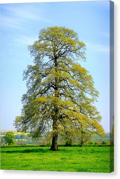 The Other Tree Canvas Print