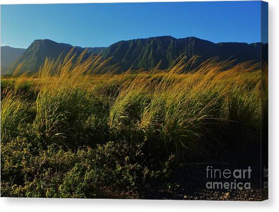 Kalaupapa Cliffs Canvas Print - The Pali And Pili Grass by Craig Wood