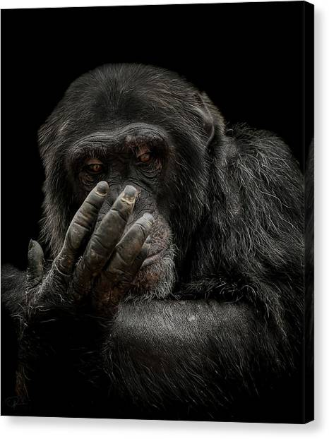 Primates Canvas Print - The Palm Reader by Paul Neville
