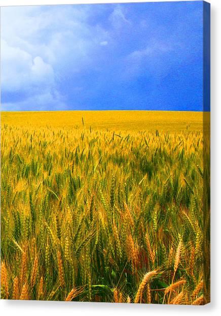 The Palouse Wheat Fields Canvas Print