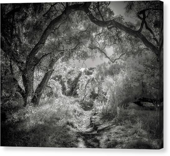 The Path Canvas Print by Joseph Smith