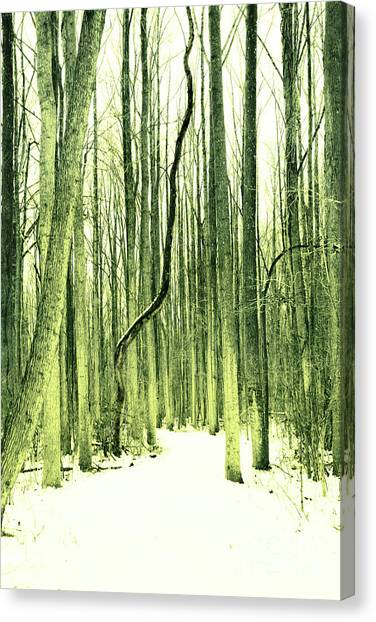The Path Less Taken Canvas Print