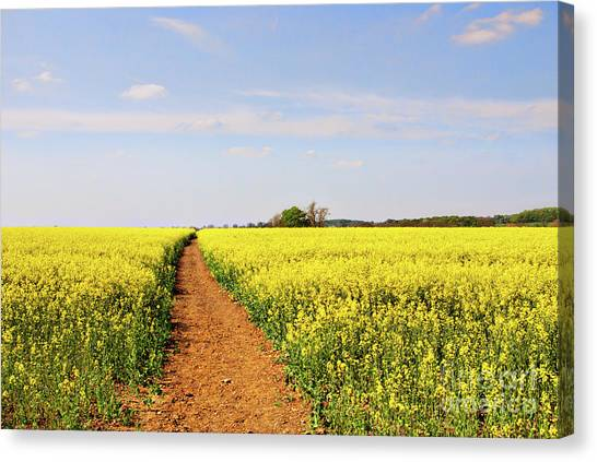 Sunny Canvas Print - The Path To Bosworth Field by John Edwards