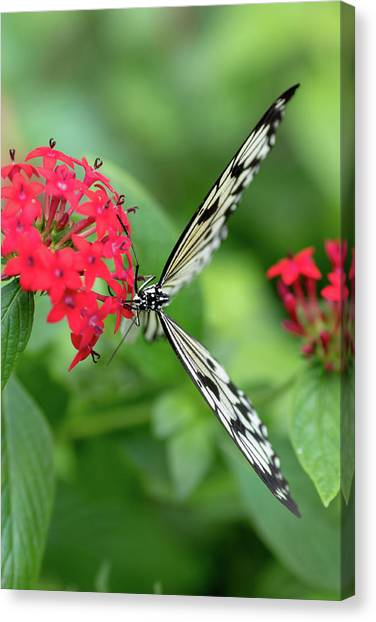 The Perfect Butterfly Land Canvas Print