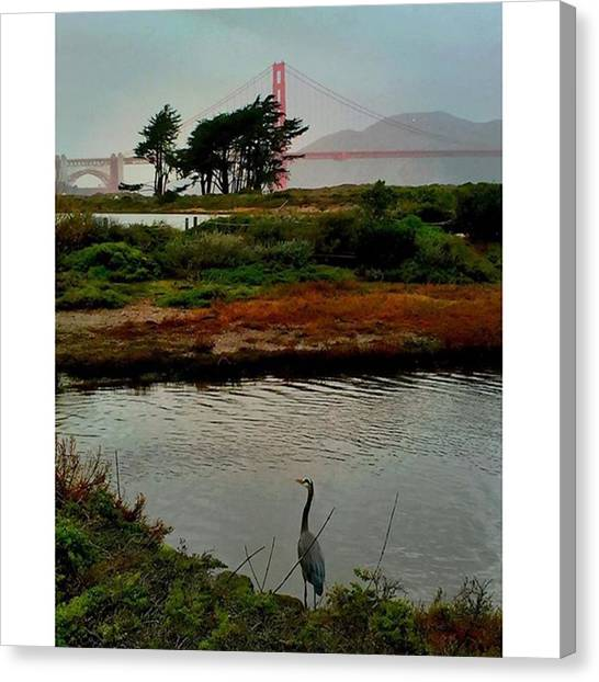 Herons Canvas Print - The Perfect Pairing Of Nature And One by Steven Shewach