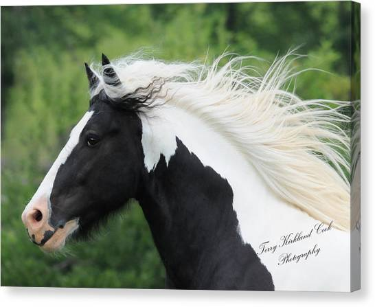 The Perfect Stallion  Canvas Print by Terry Kirkland Cook