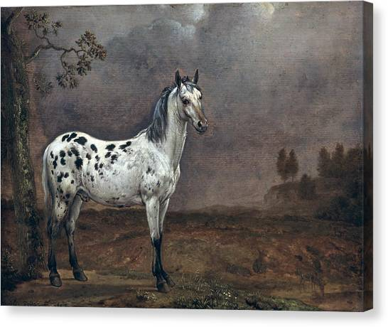 Wild Horse Canvas Print - The Piebald Horse by Paulus Potter