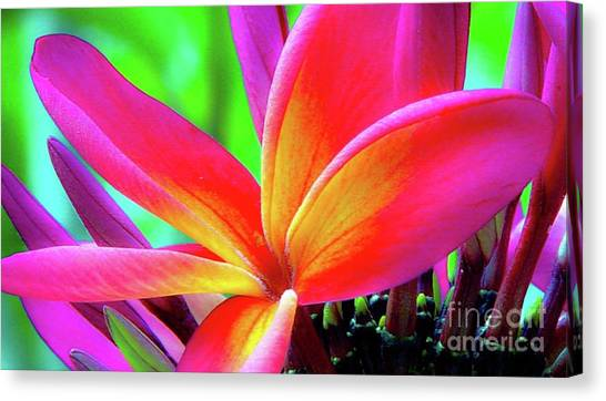 Canvas Print featuring the photograph The Plumeria Flower by D Davila