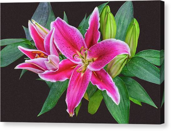 The Pulchritude Of Lady Lily Canvas Print