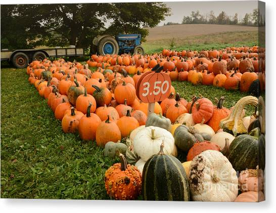 The Pumpkin Farm One Canvas Print