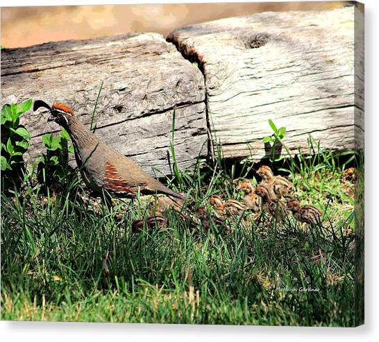 The Quail Family Canvas Print