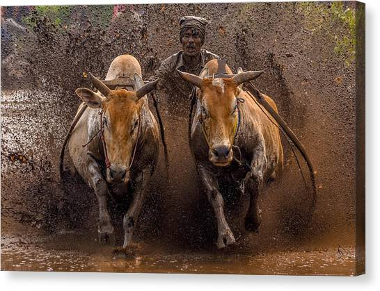 Mood Canvas Print - The Racing Cows by Media Hendriko