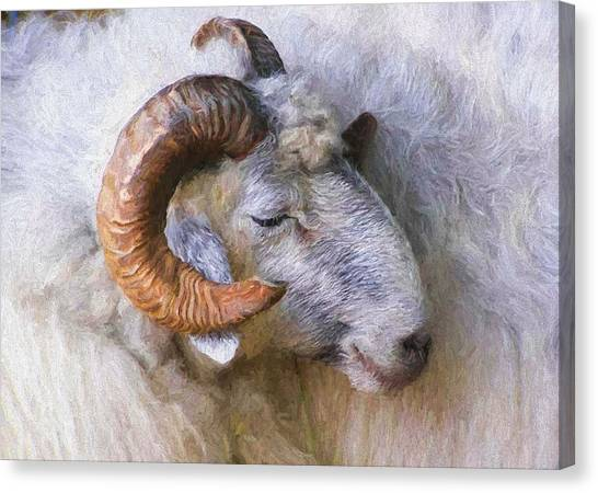 The Ram Canvas Print