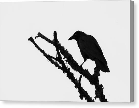 The Raven Canvas Print