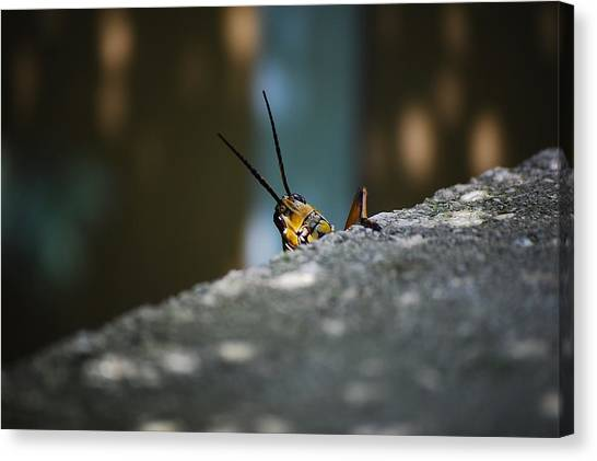 The Real Hopper Canvas Print