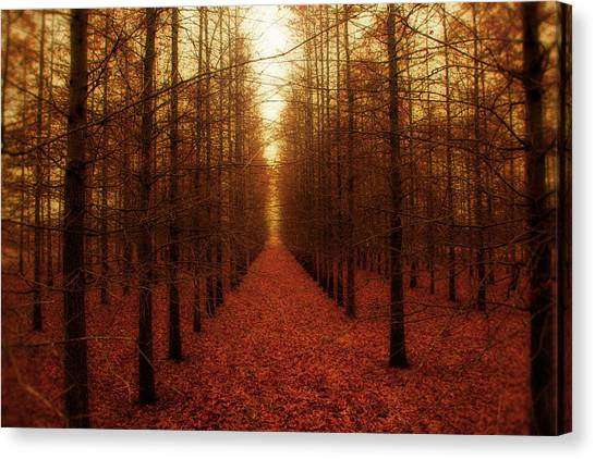 Black Forest Canvas Print - The Red Forest by Amy Tyler