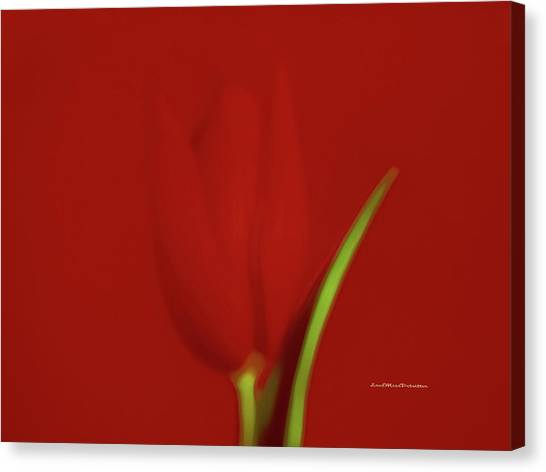 The Red Tulip Art Photograph 2 Canvas Print