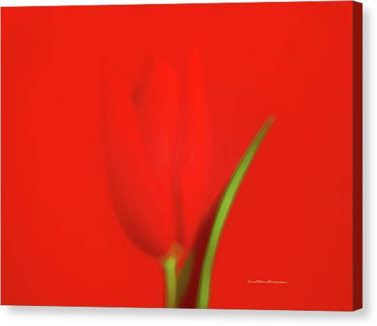 The Red Tulip Art Photograph Canvas Print
