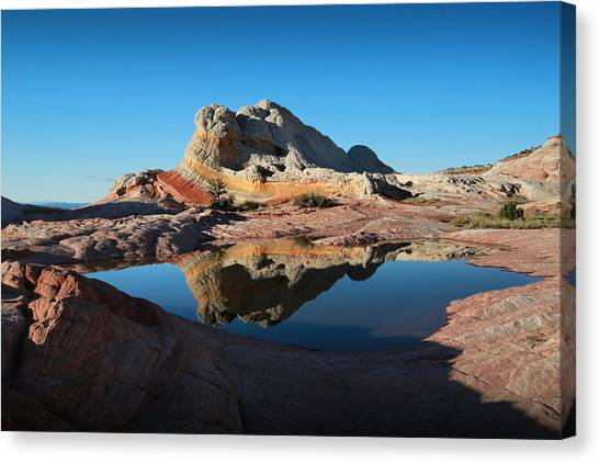 Arizona Coyotes Canvas Print - The Reflecting Pool by Gary Yost