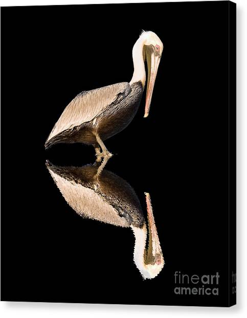 The Reflection Of A Pelican Canvas Print