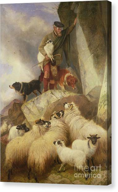 Ewe Canvas Print - The Rescue by Richard Ansdell