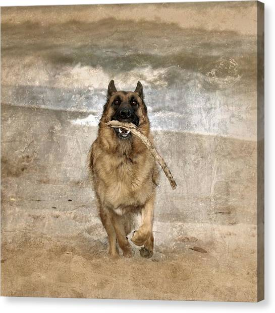 German Shepherds Canvas Print - The Retrieve by Angie Tirado