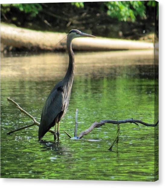 Herons Canvas Print - The River God #gratitude #lovelife by John Repoza