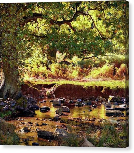 Landscape Canvas Print - The River Lin , Bradgate Park by John Edwards
