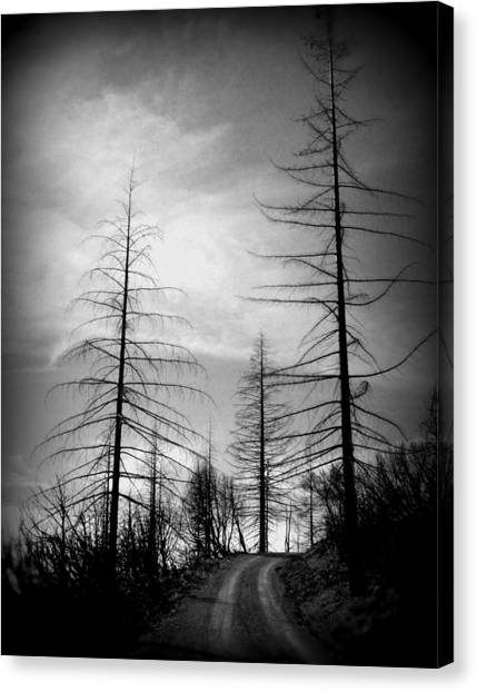 The Road Not Taken    Up On Hwy 2509 Canvas Print
