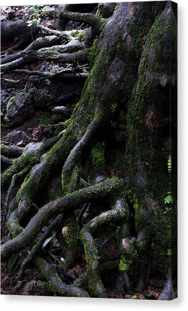 The Root Canvas Print by Pramod Bansode