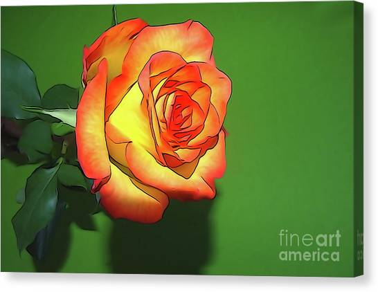 The Rose 4 Canvas Print
