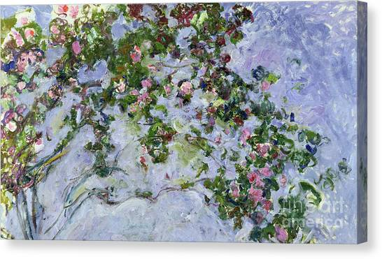 Rose In Bloom Canvas Print - The Roses by Claude Monet