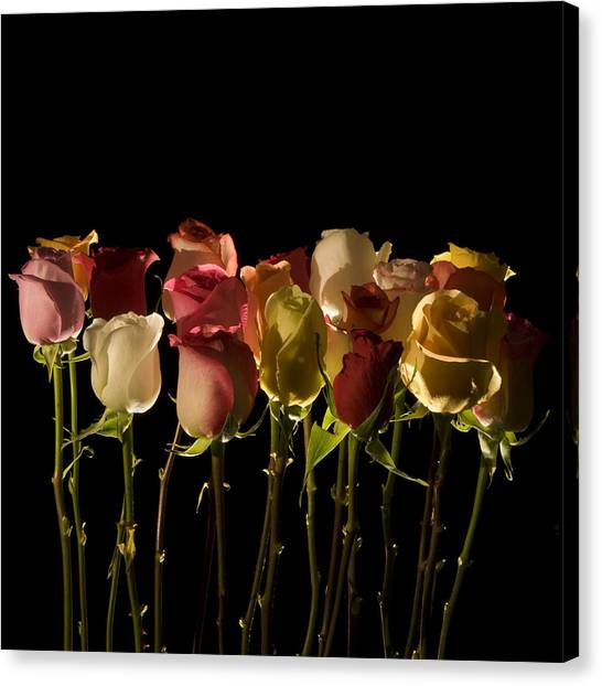 The Rose's Forest Canvas Print