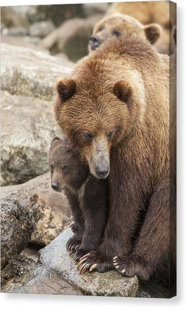 Bear Claws Canvas Print - The Safest Place In The World by Tim Grams