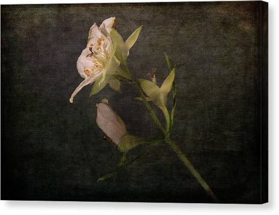 Canvas Print featuring the photograph The Scent Of Jasmines by Randi Grace Nilsberg
