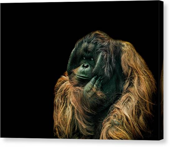 Primates Canvas Print - The Sceptic by Paul Neville