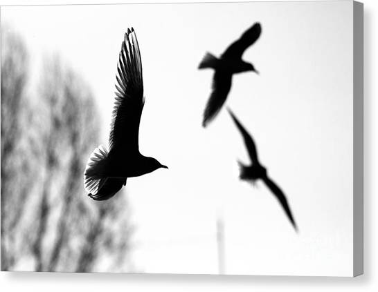 The Seagull Flying  Canvas Print