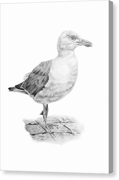 The Seagull Strut Canvas Print