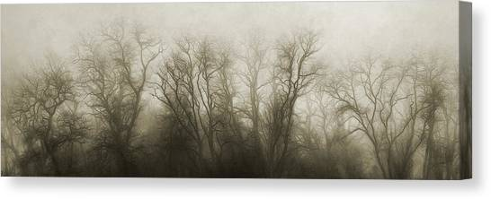 Foggy Forests Canvas Print - The Secrets Of The Trees by Scott Norris