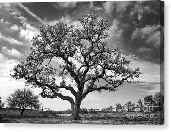 The Sentinel Bw Canvas Print