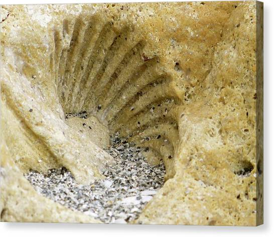 The Shell Fossil Canvas Print