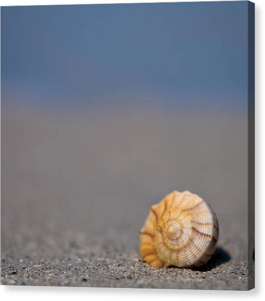 The Shell Canvas Print by Ryan Heffron