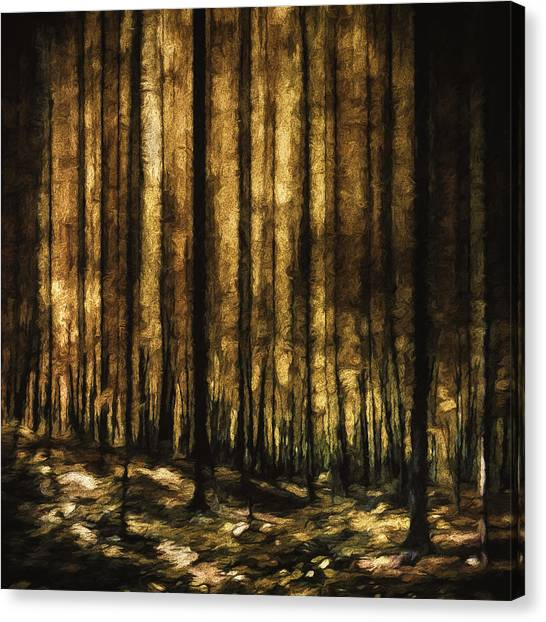 Gold Canvas Print - The Silent Woods by Scott Norris