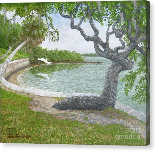 The Sitting Oak Tree Canvas Print by Jim Soldo