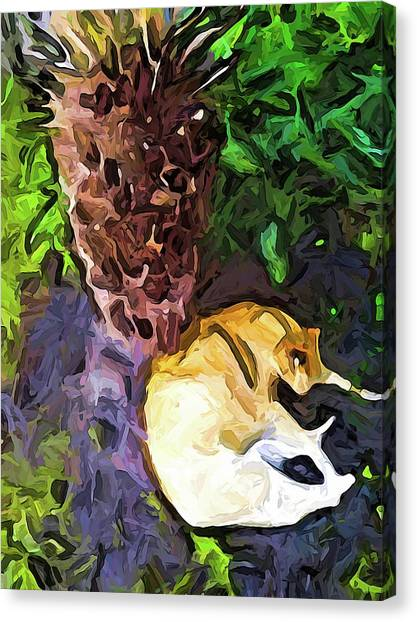 The Sleeping Cat And The Dead Tree Fern Canvas Print