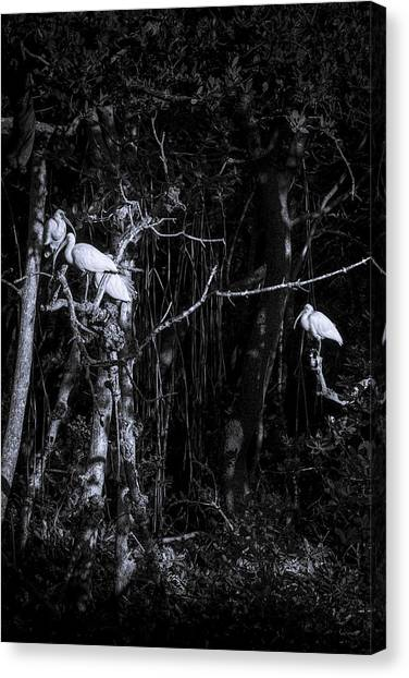 Ibis Canvas Print - The Sleeping Quaters by Marvin Spates